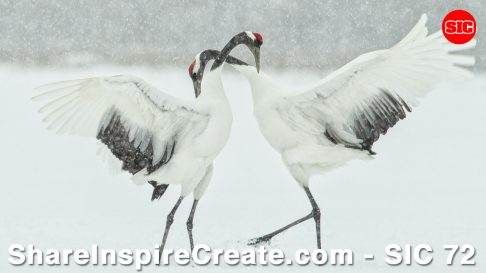 SIC 72 - Twisted Hands & Red-Crowned Cranes with Martin Bailey